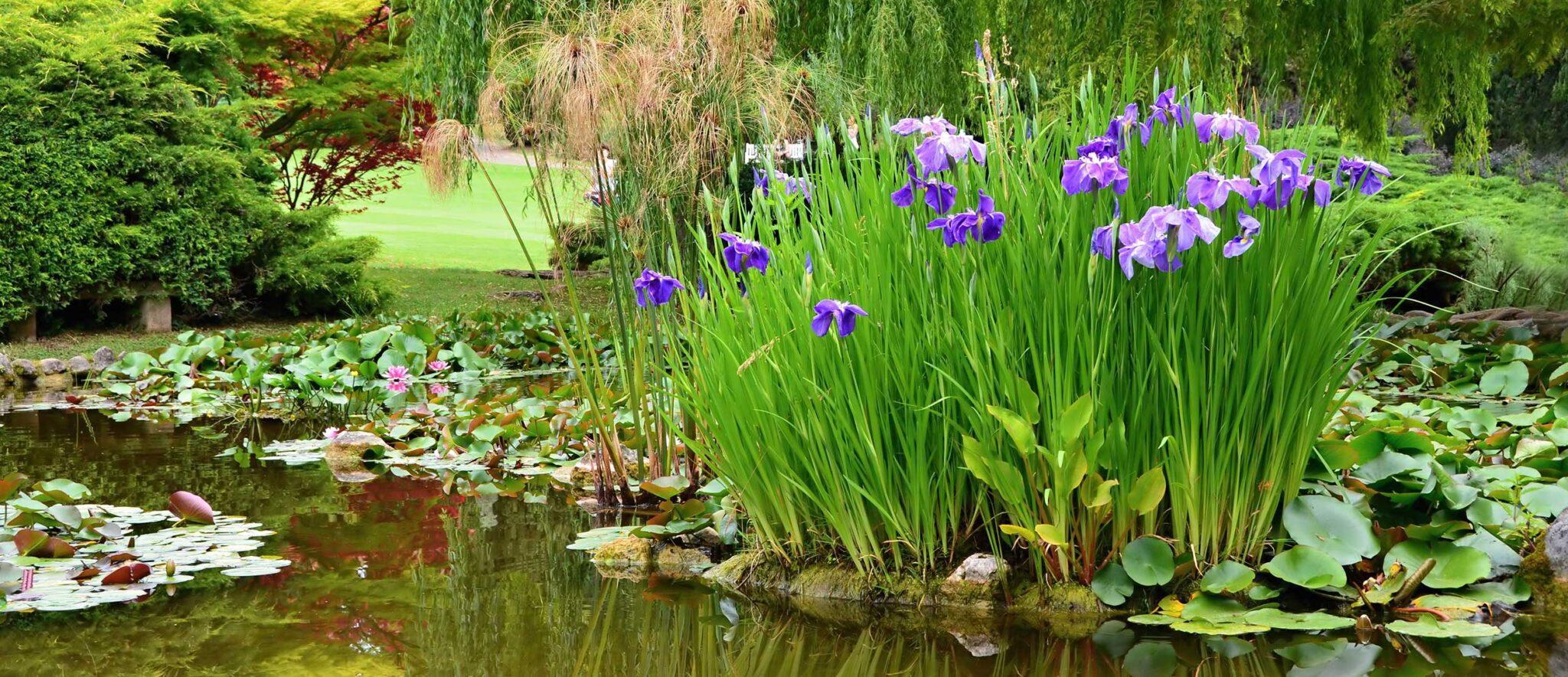 Classic pond