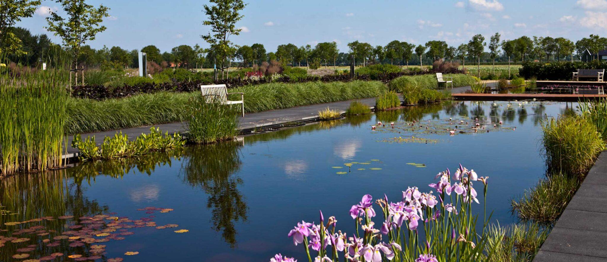 Modern pond